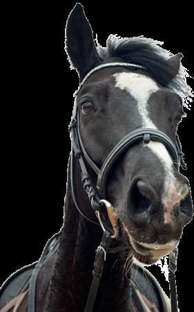 Horse-Transparent-Background